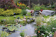 Beautiful Pond /  Water Garden