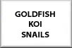 Goldfish, Koi, Golden Orfe and Scavengers